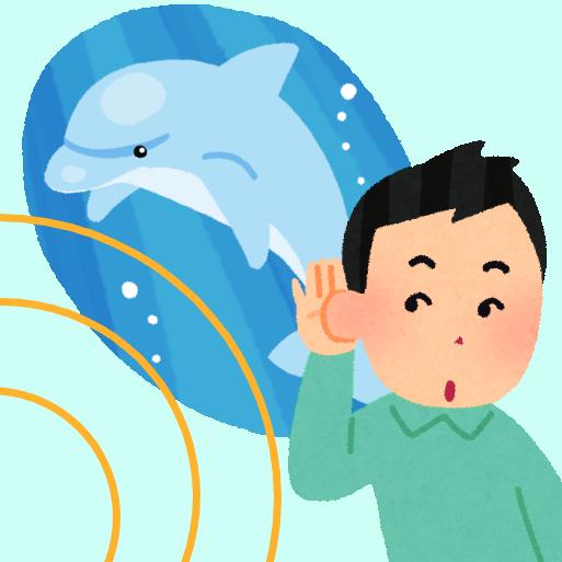耳以外で音を聴く 人間とイルカ 聴き方の違い