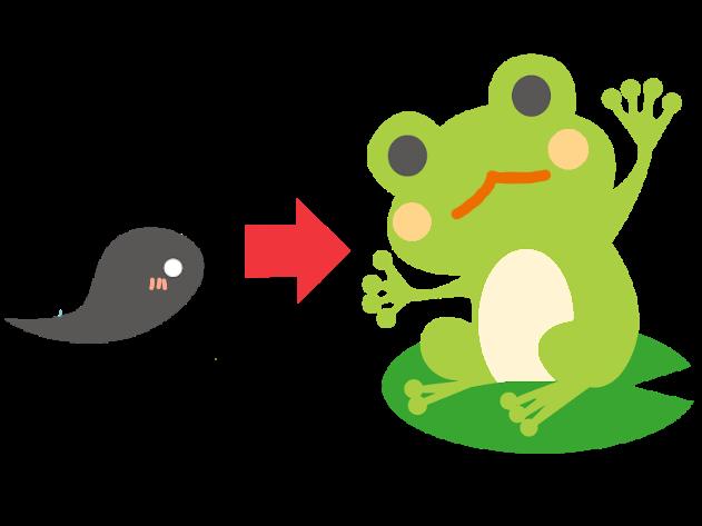カエル、オタマジャクシ、成長