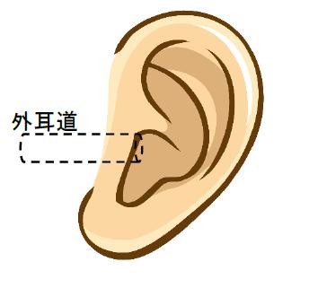 外耳道 耳